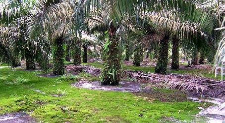 banner_palm