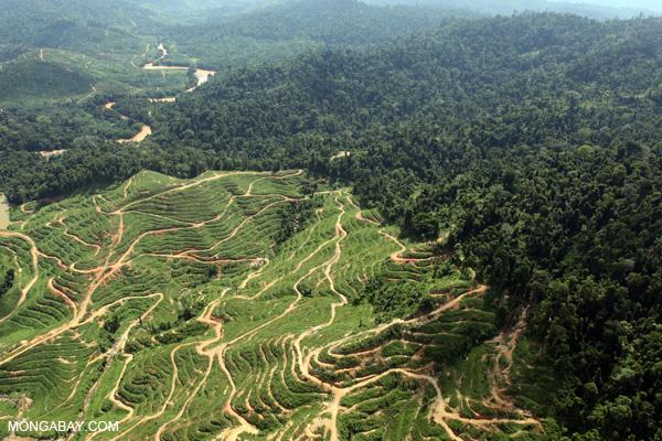 棕櫚油種植園和雨林。攝影:Rhett A. Butler