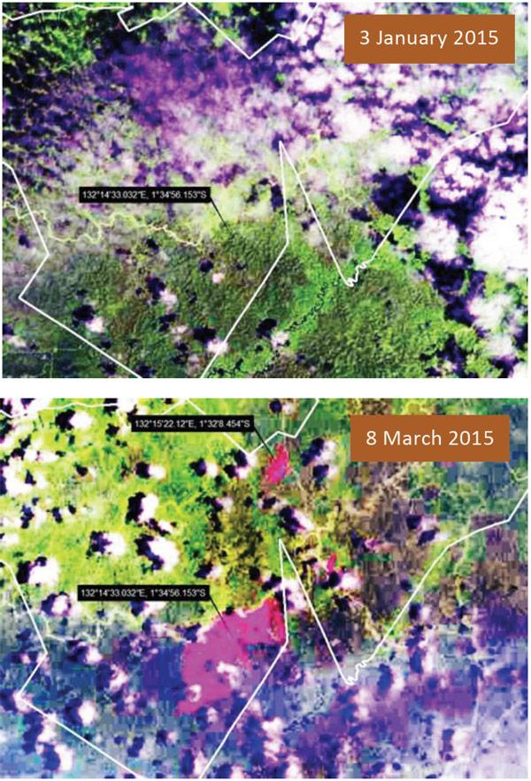 從綠色經濟所展示的陸地衛星(Landsat)可看出,VMA公司於Wayer and Moswaren縣的特許地正出現毀林的現象。