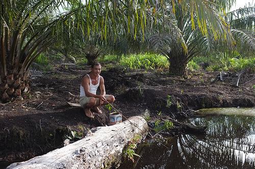 印尼一名棕櫚油工人正在釣魚。圖片來源:CIFOR。(CC BY-NC-ND 2.0)