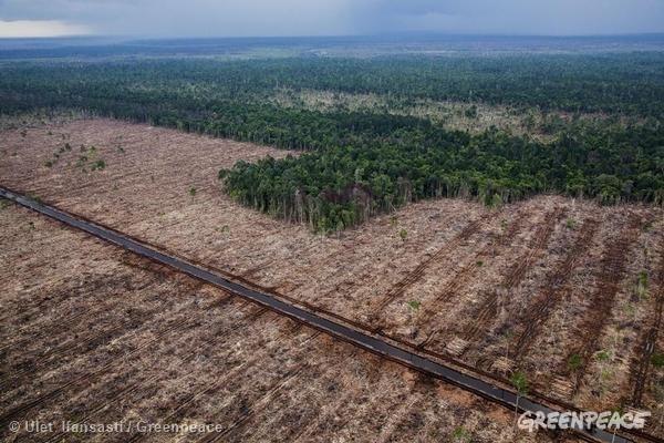 5月,APRIL 破壞雨林的惡行有增無減,大規模的毀林令無數動物流離失所。
