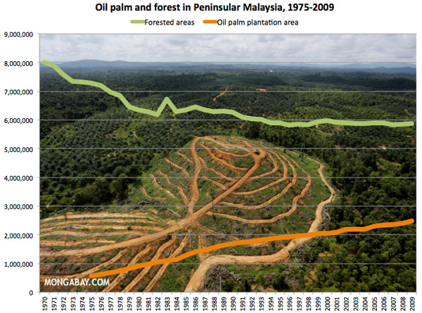 1975-2009年馬來半島油棕櫚樹的種植面積和森林面積(公頃)