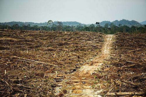 全球最大食品加工業嘉吉集團(Cargill)在印尼的毀林行為。圖片來源:Rainforest Action Network。(CC BY-NC 2.0)