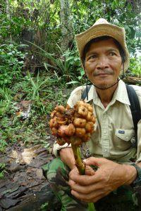來自Long Banggah的Anyi Jalan(果實)和long Tebangan的Anyi Lah(葉子),在遊走森林間,即能找到可吃的果實和吹出笛音的葉子,然而若水壩建成,這一切將化為記憶。