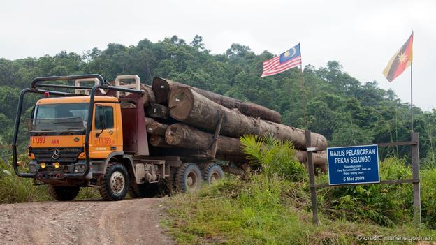 伐木公司改變了本南人的森林家園