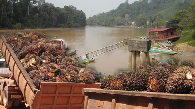 Oil-palm-plantations-are-killing-our-rivers-chinese-785x442