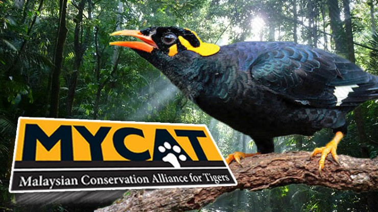 Save-Malaysias-wildlife-with-MYCATs-Wildlife-Crime-Hotline_CHINESE_785x442