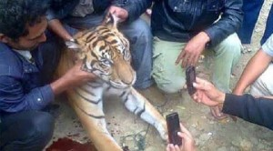 Save-Malaysias-wildlife-with-MYCATs-Wildlife-Crime-Hotline_TEXT
