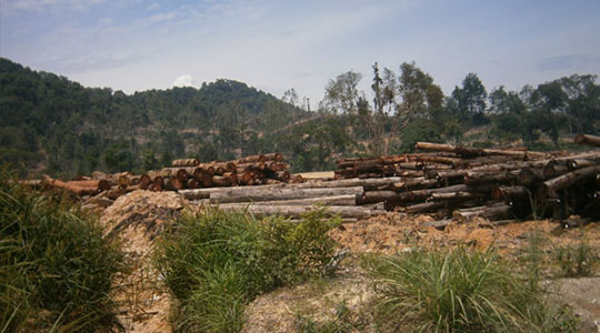Sustainable-forestry-practices-and-certification-cost-conundrum_TEXT1