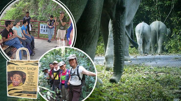 Taking-a-CAT-walk-through-the-jungle-with-Malayan-Tigers_BAHASA_785x442