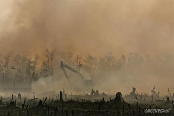 在森林大火引致的嚴重霧霾之中,殘留了挖泥機 開發泥炭地以種植棕櫚油的鐵證 © Ulet Ifansasti / Greenpeace