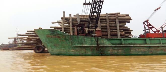 砂拉越海警第5區域部隊於泗裏街水域取締非法伐木行動﹐成功破獲大約927條木桐。