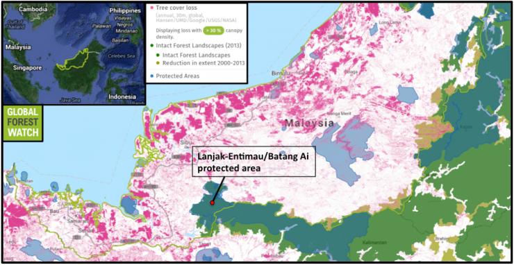 砂拉越的樹木覆蓋力損耗集中在海岸區,包括毀林及林木收割。未受破壞的森林是指原始森林,維持原狀達到足以保留其原有的生物多樣性。砂拉越所剩不多的未受破壞的森林在2001年至2013年間少了5萬公頃。州內最大的未受破壞森林位於擁有最多人猿的蘭查恩迪茂野生動物保護區及巴當艾國家公園。