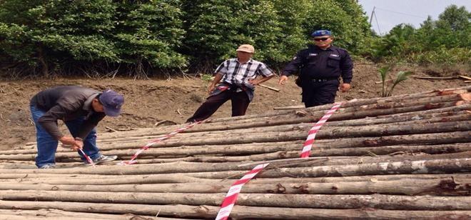 砂拉越水警第5區隊伍於雙溪柏拉威破獲400條非法紅樹木桐﹐總值約6800令吉。