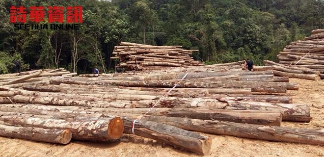在雙溪砂拉越巴幹3哩半地區遭執法單位破獲的約1000條木桐。