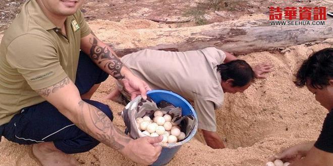 管理員展示所發現的部分海龜蛋