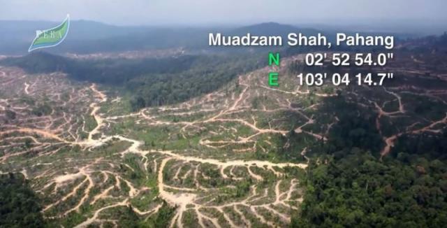 彭亨州姆阿占沙的森林青蔥不再。(圖片來源:PEKA)