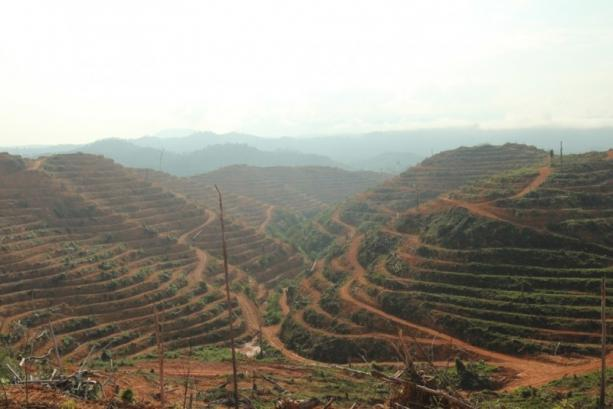 永久森林保留區及非永久森林被大肆開墾,改作為種植與農業用地,造成森林面積減少了。