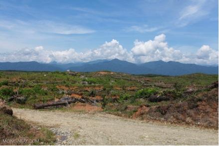 蘇門答臘列尤擇山(Gunung Leuser)國家公園附近的一座油棕櫚種植園。攝影/巴特勒(Rhett A. Butler)