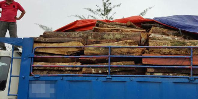 羅裏後車鬥上當時載滿著相信剛被砍下,未經加工處理的原木。