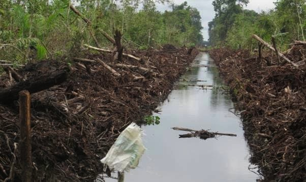 08_13122015_BLD destroyed Sibu PeatLand.pic002