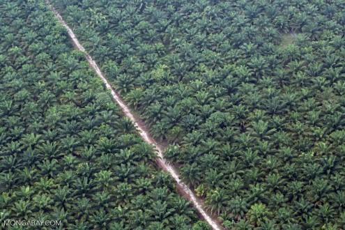 oil-palm-riau-495x330