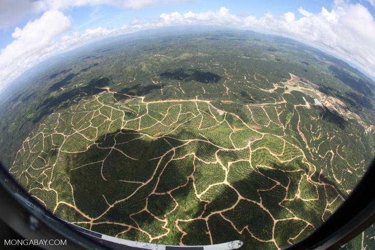 sabah-oil-palm-aerial