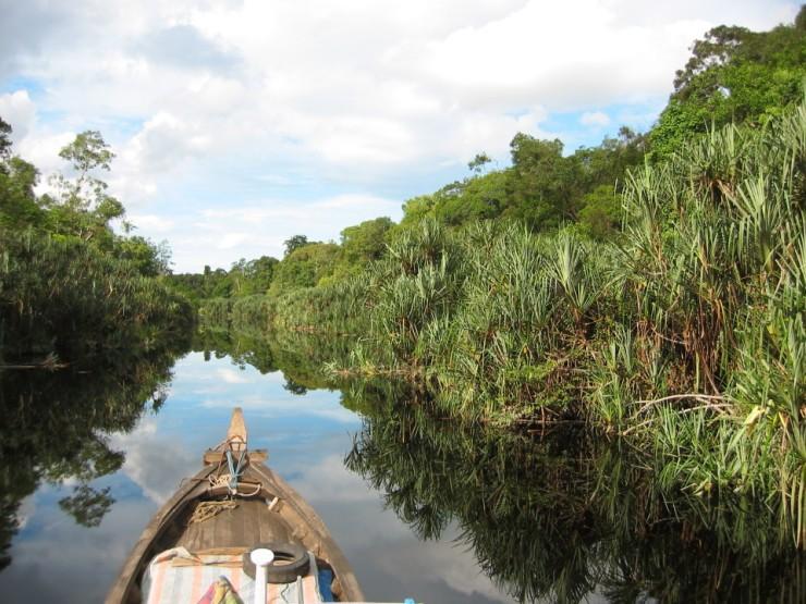 3-wg-pristine-peatswamp-forest-in-berbak-national-park-sumatra-960x720