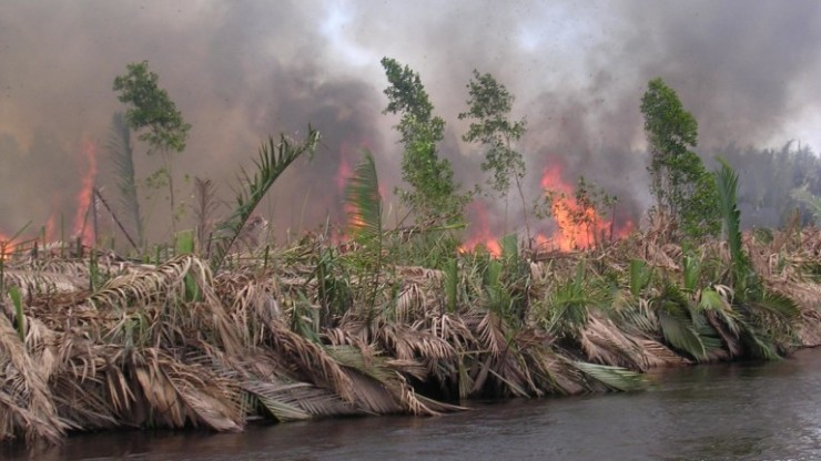 burning-peatland-in-kalimantan-indonesia-pieter-van-eijk-e1467894231892-768x432