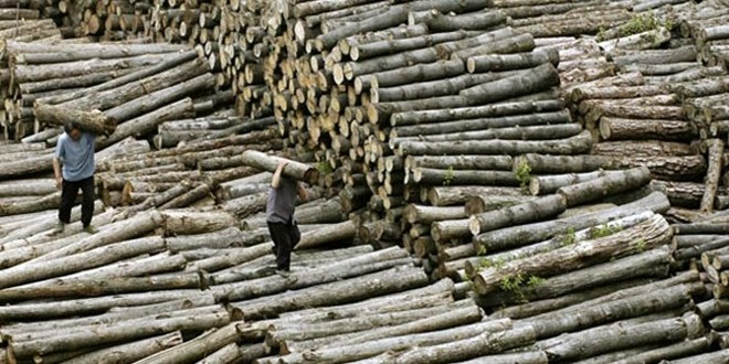 lead1bp21-al-timber-p1-660x330