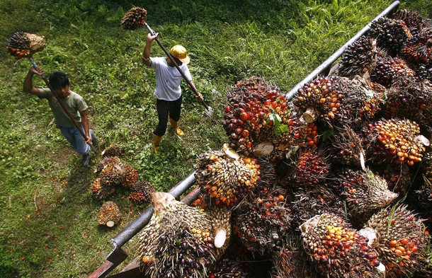 Worker load palm fruits onto a truck at a plantation in the Luwu district of Indonesia's South Sulawesi province