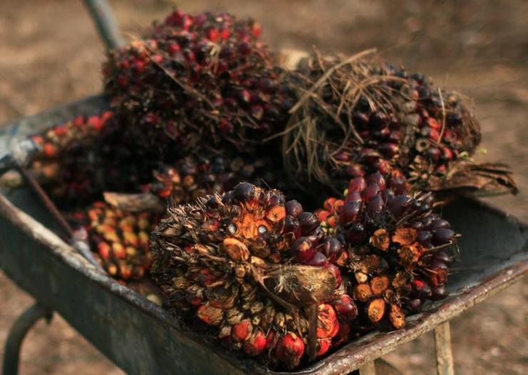 palm_oil2702