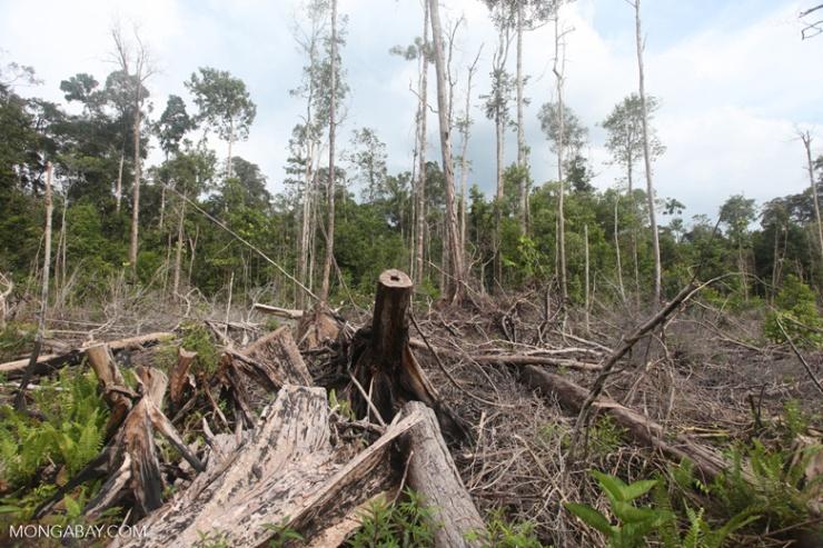 restoreforest01.jpg