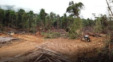 被推土機砍伐的樹木。