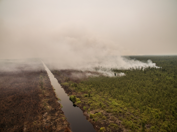 Forest Fires Investigation in PT GAL, Central Kalimantan